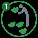 icone-insalata-numeri-01