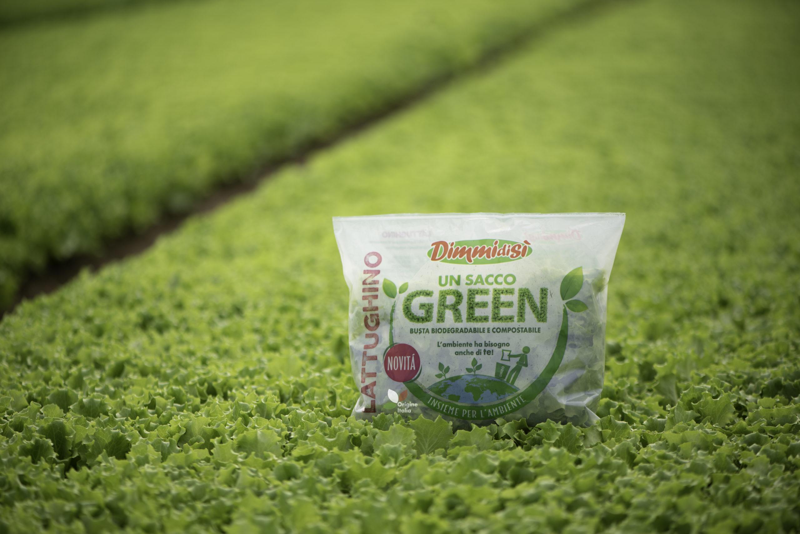 L'insalata DimmidiSì Un Sacco Green